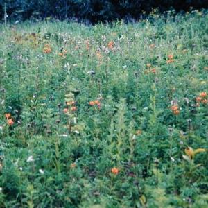 Камчатские самоцветы