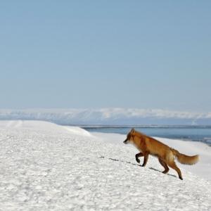 Камчатские животные