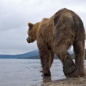 Медвежья рыбалка
