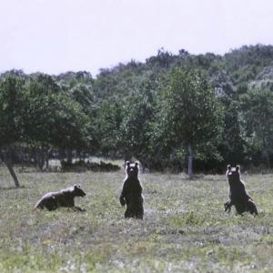 Осенняя охота на медведя