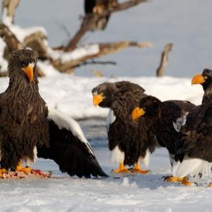 Птицы Камчатки
